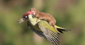 Όταν τα ζώα βοηθούν άλλα ζώα…