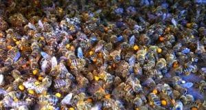 Μέλισσες - Μελίσσια