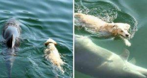 Σκύλος - Δελφίνι - Φιλία