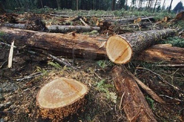 Λαθραία Υλοτόμηση - Δάσος