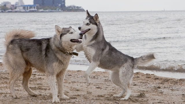 Σκύλος - Κατοικίδια - Ζώα