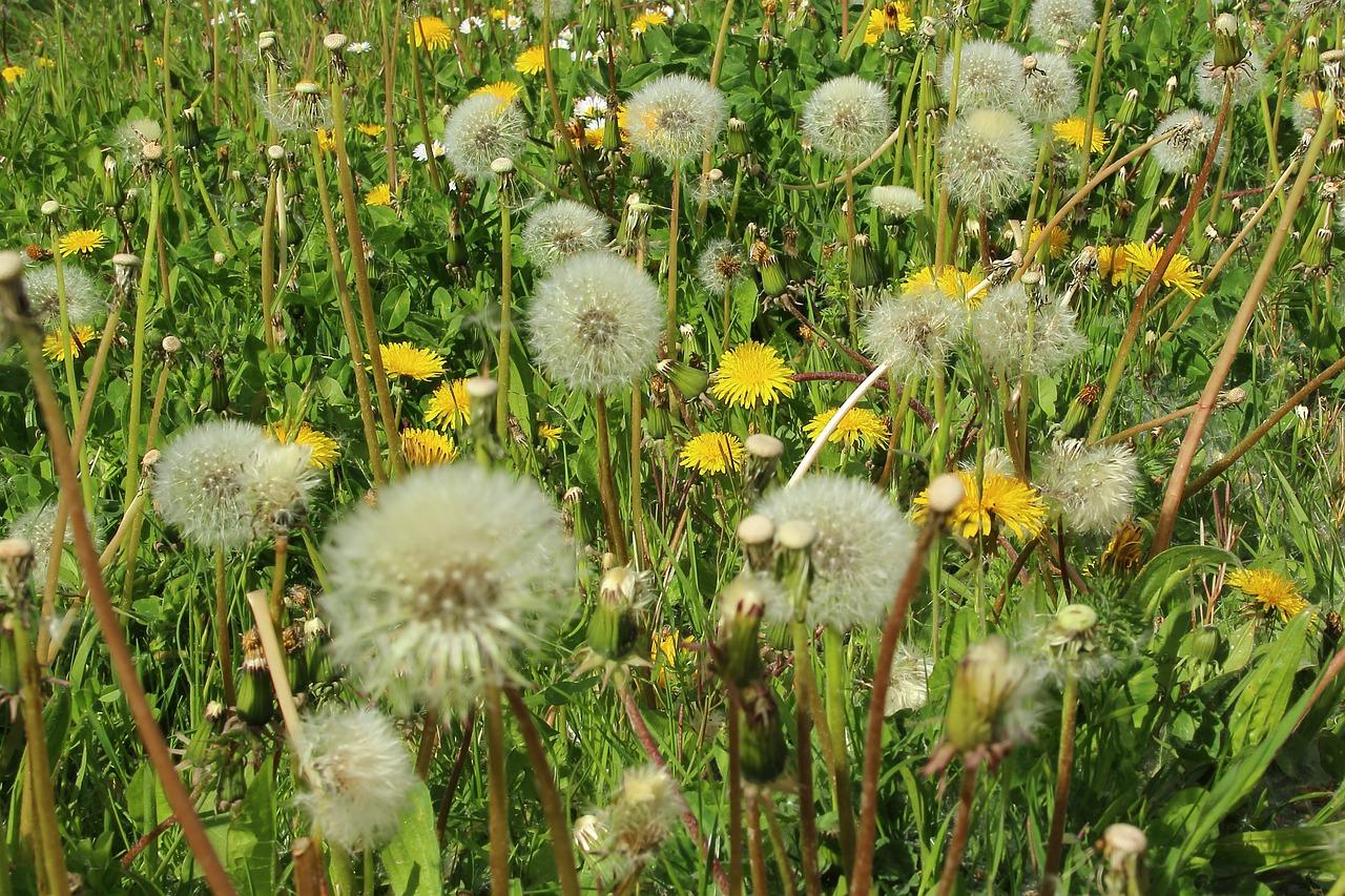 Κορωνοϊός: Τι γίνεται σε περίπτωση που είμαστε αλλεργικοί