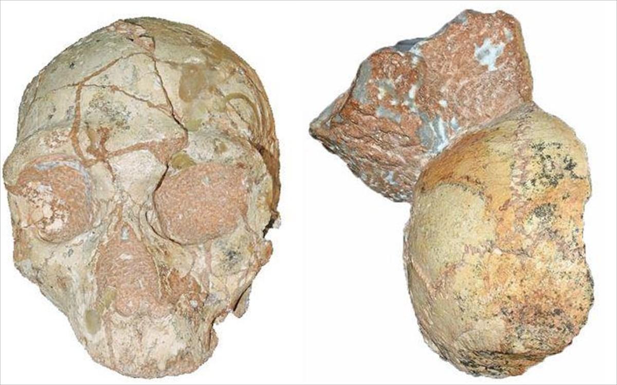 Βουλγαρία: Ανακαλύφθηκαν πρώιμα απολιθώματα του Homo Sapiens ηλικίας περίπου 45.000 ετών