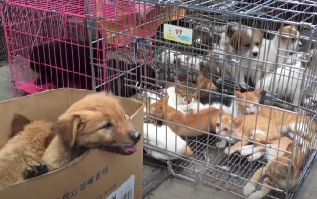 Φεστιβάλ κρέατος σκύλου 2015