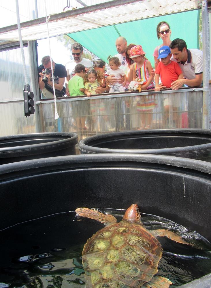 ΑΡΧΕΛΩΝ: Αισιόδοξο μήνυμα για τη Παγκόσμια Ημέρα θαλάσσιων χελωνών