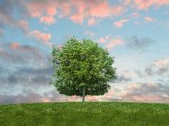 Περιβάλλον, φύση