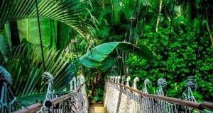 Τροπικό δάσος, Αμαζόνιος
