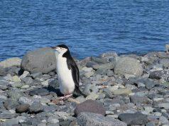 Πινγκουίνοι Ανταρκτικής
