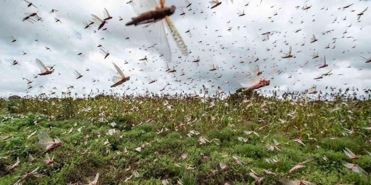 Συναγερμός στην Αργεντινή, από νέα επιδρομή ακρίδων