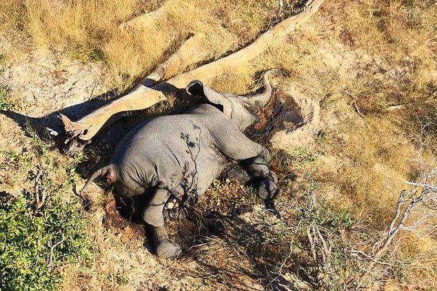 Εκατοντάδες ελέφαντες πεθαίνουν μυστηριωδώς στη Μποτσουάνα