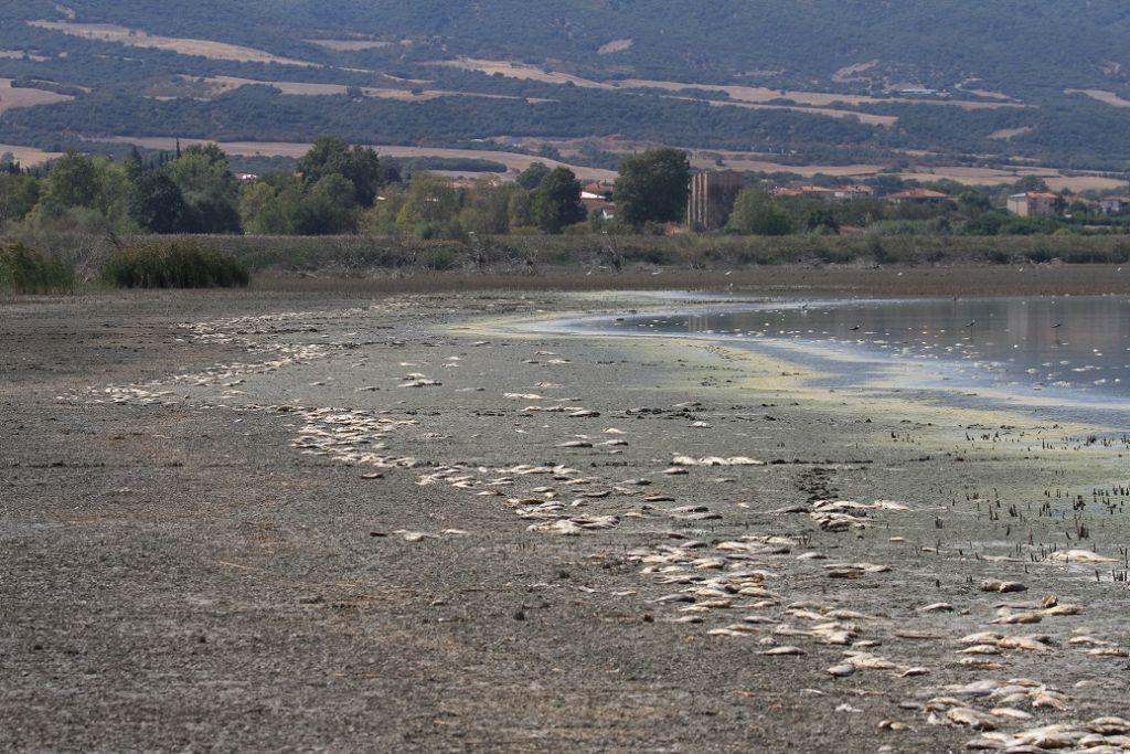 Κορώνεια και Δραπετσώνα: Οικολογική αναβάθμιση με νέα έργα και πρόσωπα