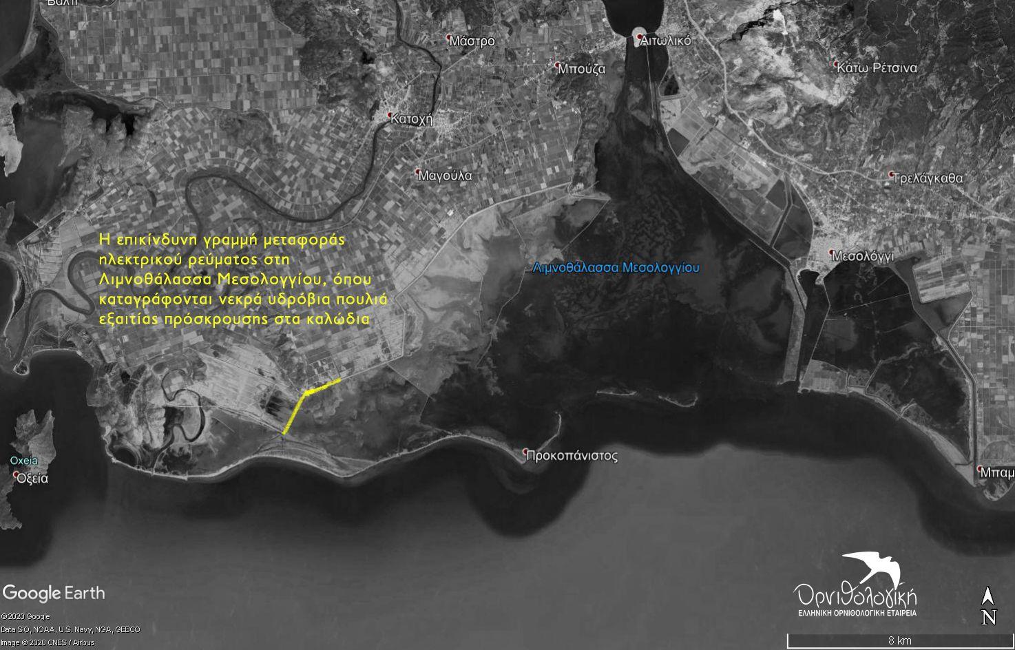 Λιμνοθάλασσα Μεσολογγίου: Καλώδια-παγίδα για τους Αργυροπελεκάνους