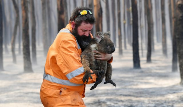2020 01 07 australia fires wildlife