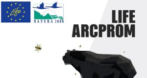 Life arcprom logo
