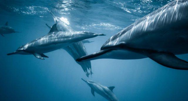 delfinia 1090