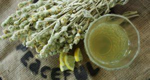 Τσάι του βουνού Ευβοίας