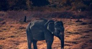 ελέφαντας αφρική