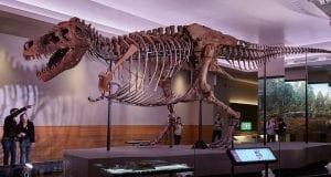 τυραννόσαυρος ΣΤΑΝ
