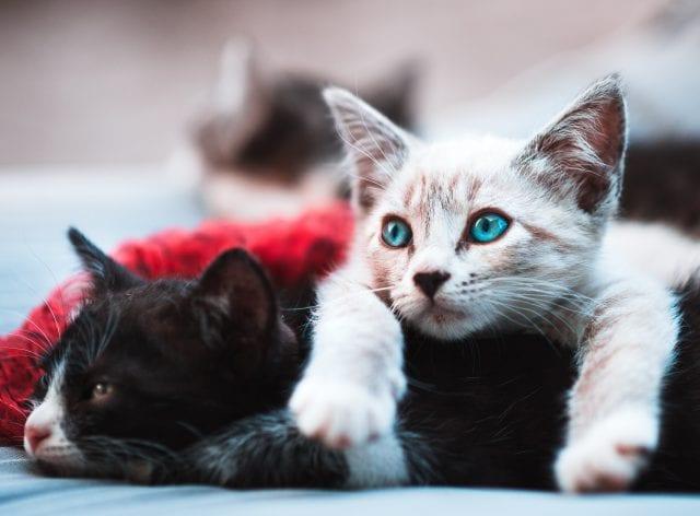 γάτες