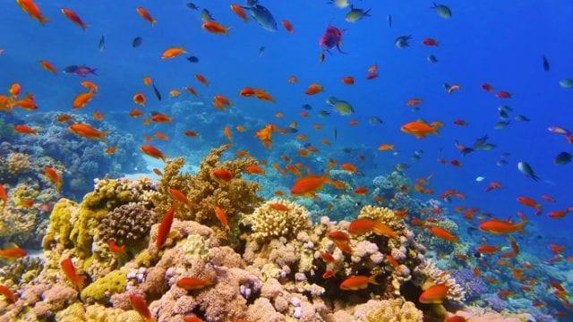 Μεγάλος Κοραλιογενής Ύφαλος