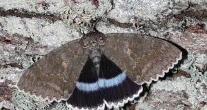 Πεταλούδα -ΑΠΕ-ΜΠΕ