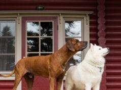 Elatos Resort Dog Weekend 1