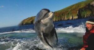 fungie δελφίνι