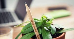 Μολύβια φυτά