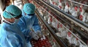 γρίπη πτηνά