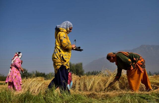 γυναίκες γεωργία