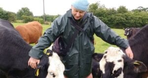 κτηνοτρόφοι αγελάδες