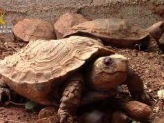 λαθρεμπόριο χελώνα