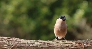 οικότοποι βιότοποι πουλι