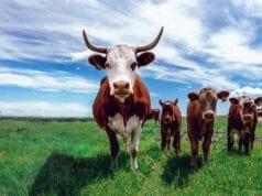 Κτηνοτροφία και κλιματική αλλαγή
