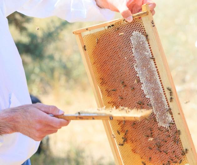 Μέλι και μελισσοκομικά προϊόντα (1)