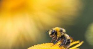 Μέλισσα
