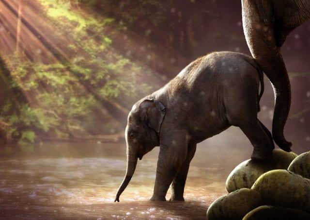 μωρό ελέφαντας