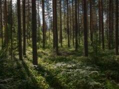 δάσος αποψίλωση