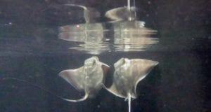 Photograph: Sea Life Kelly Tarlton's Aquarium