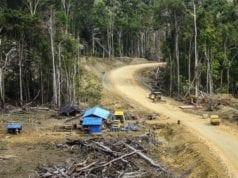 απαψίλωση δάσος