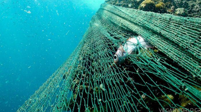βυθός δίχτυα