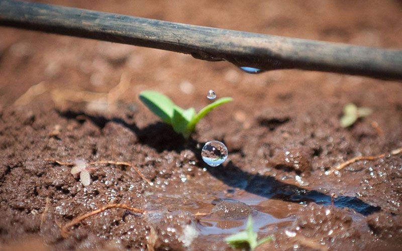 καλλιέργεια νερό