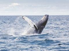 φάλαινες