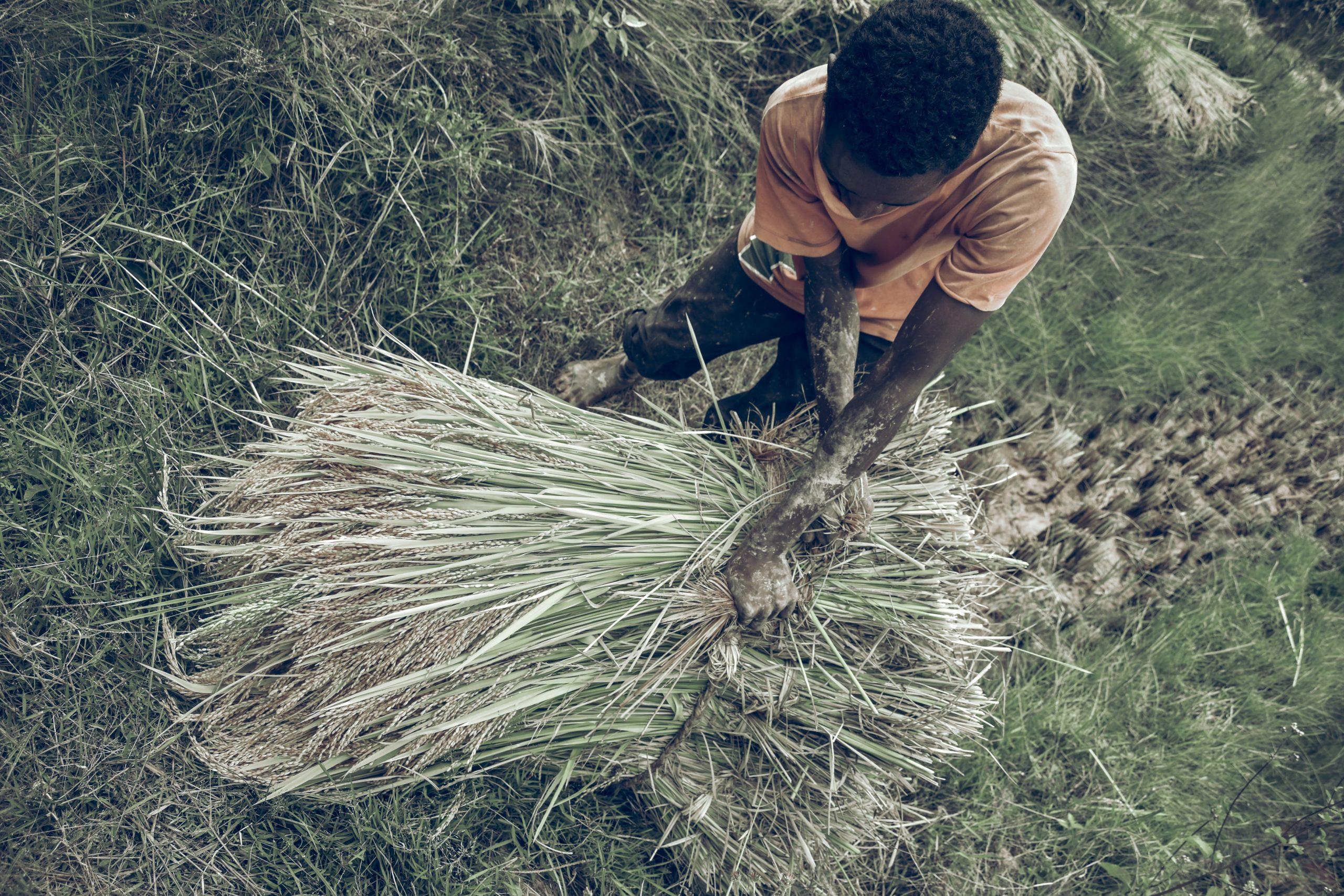 γεωργία - Μαδαγασκάρη