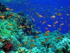 βυθός ψάρια οικοσύστημα