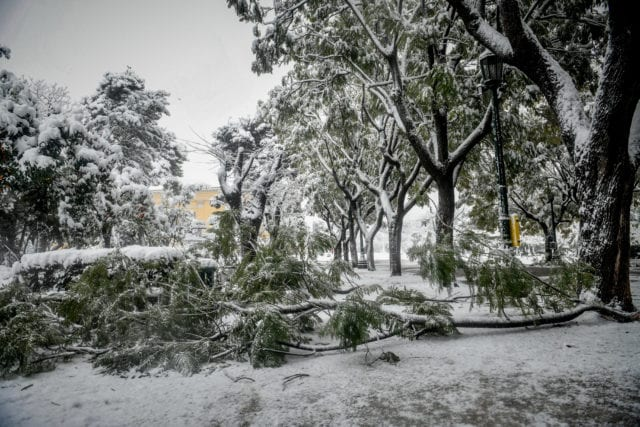 Χιονόπτωση στο κέντρο της Αθήνας,πτώσεις δέντρων στο Ζάππειο από το βάρος του χιονιού, Τρίτη 16 Φεβρουαρίου 2021. (EUROKINISSI/ΤΑΤΙΑΝΑ ΜΠΟΛΑΡΗ)