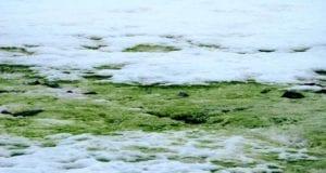 πράσινο χιόνια