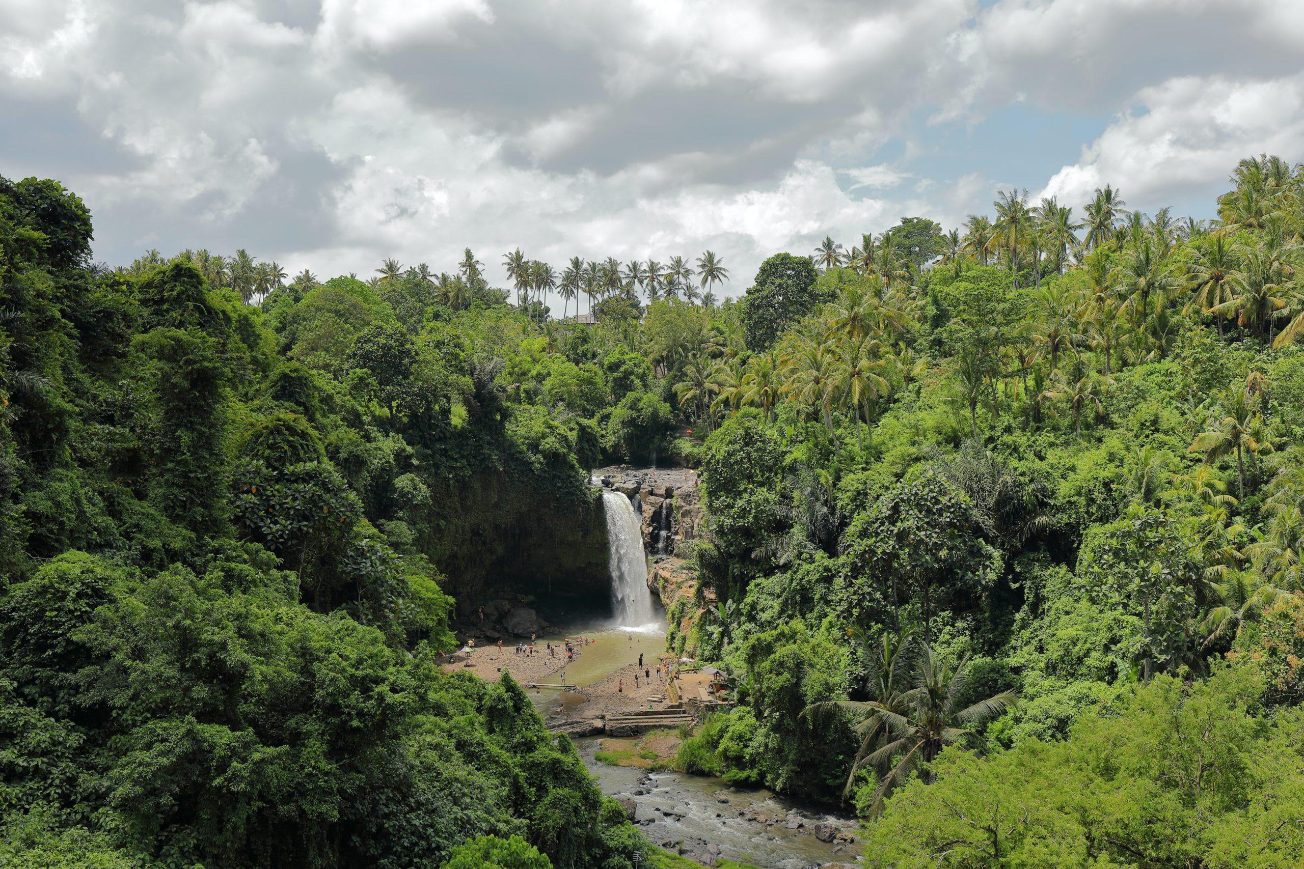 τροπικό δάσος Ινδονησία