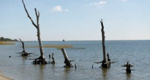 Ότι απέμεινε από παράκτια δάση στο Assategue Island Virginia Kevin Lamarque Reuters