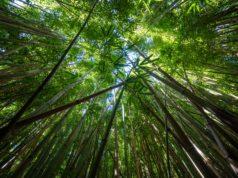 τροπικά δάση